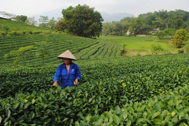 Lào Cai: Tập trung thực hiện tiêu chí quy hoạch trong xây dựng nông thôn mới